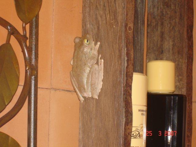 Frog in bathroom 1.JPG