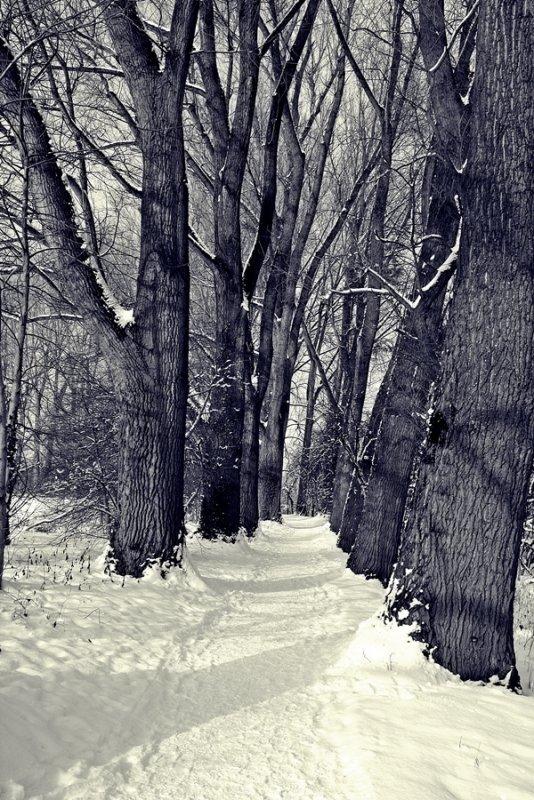 Schnee 2014 019ükl.JPG