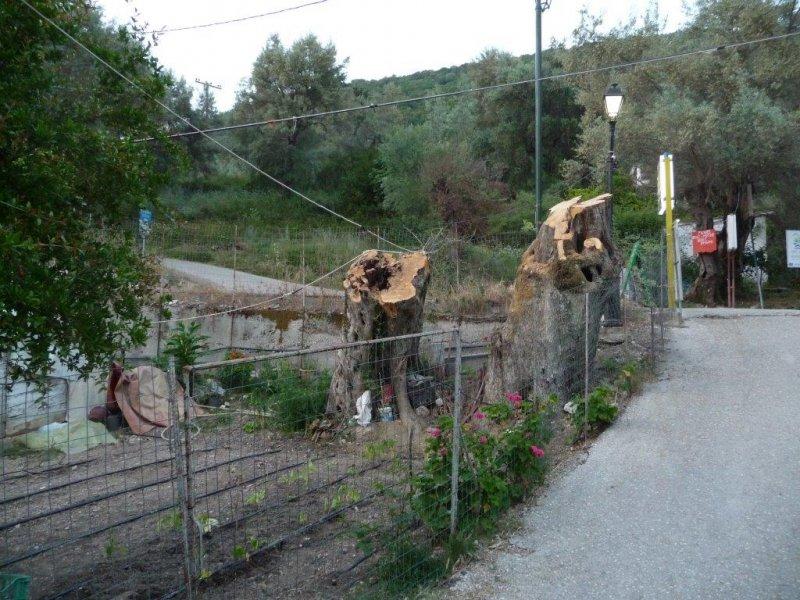 2 Olivenbaum.jpg